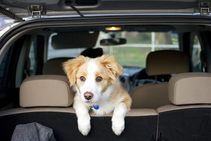 Car Travel With A Puppy
