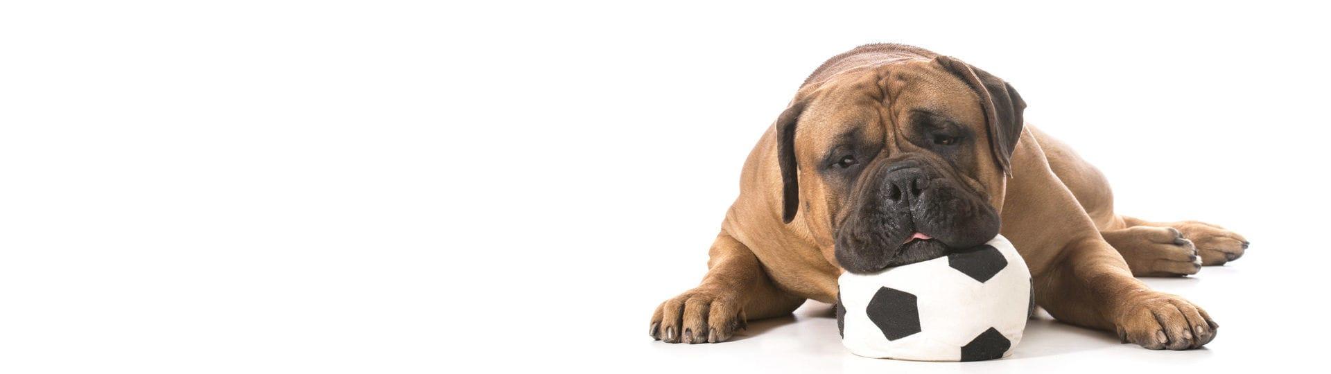 Adaptil é a primeira linha de produtos não medicamentosos para uso no ambiente, destinado a auxiliar na adaptação dos cães em situações adversas do dia a dia.