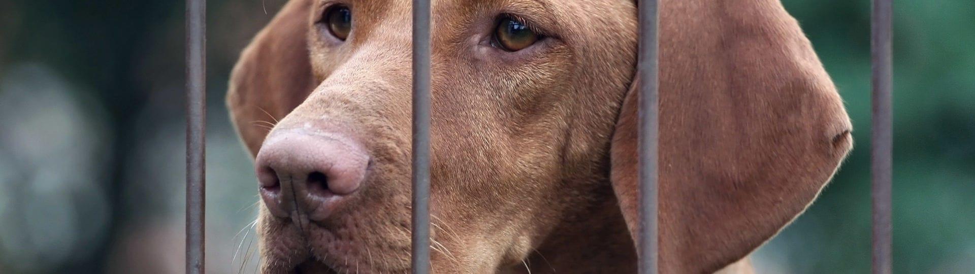 chiens dans les centres de placement des animaux ou dans des chenils-pensions