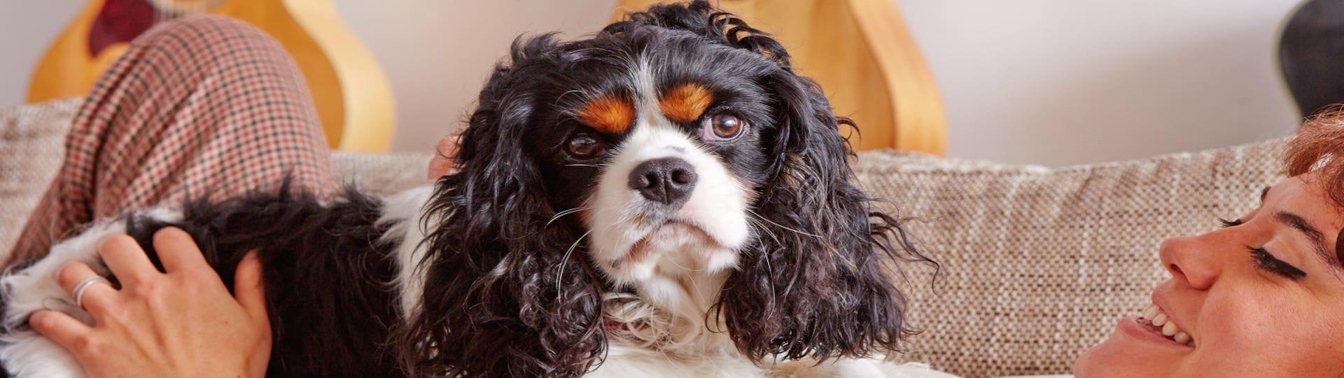 Adaptil pomáhá psům při problémovém chování