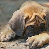 el perro se esconde