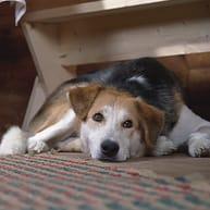 kutya reszketés
