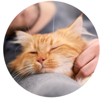 Keep Your Cat Healthy The Natural Way