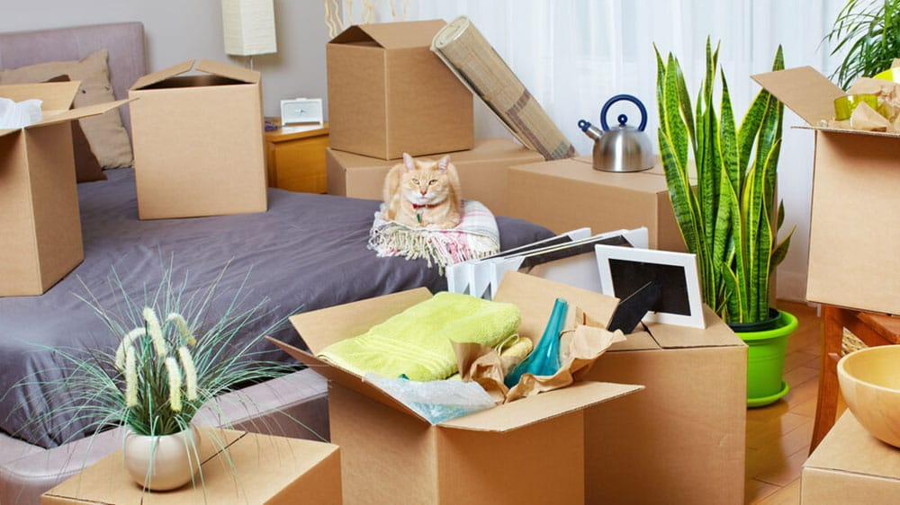 How to help your cat move home