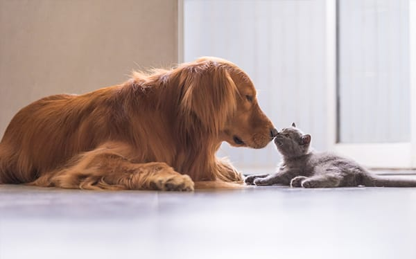 Feliway For Cats And Dogs
