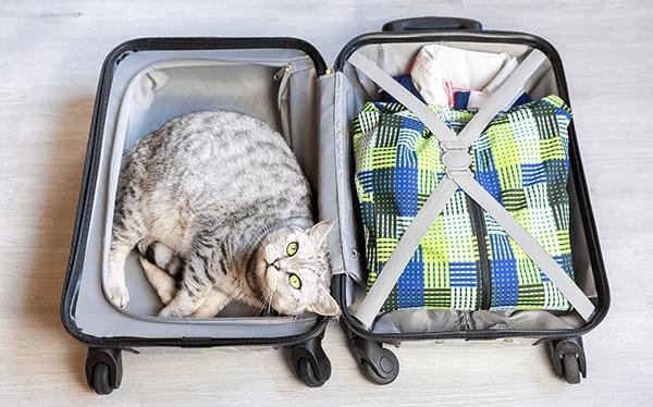 Katze liegt in einem Koffer