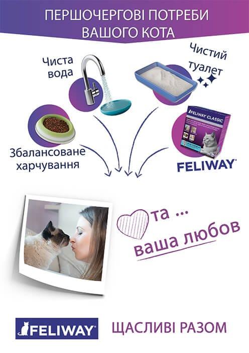 cat essentials
