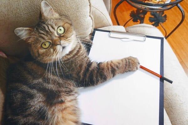 liste des choses à faire avant de partir en vacances avec son chat
