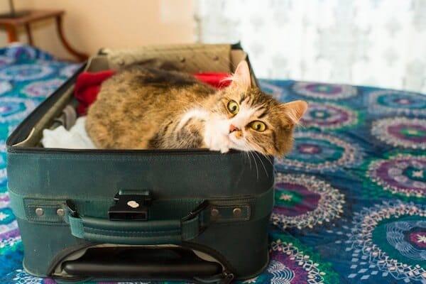 chat couché dans une valise de vêtements