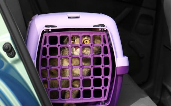 Cat in travel carrier unhappy