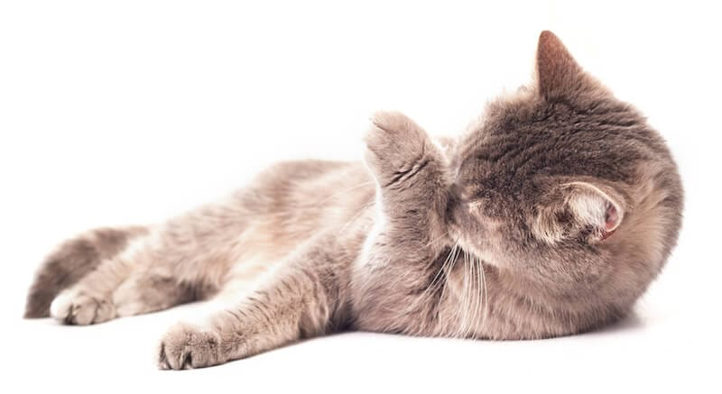 Cat Food To Help With Hair Loss