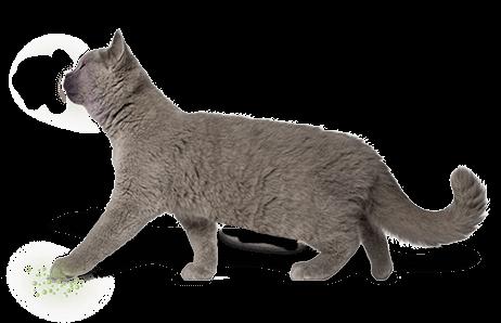 feline interdigital pheromone