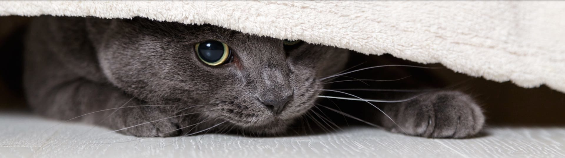 Cat hiding away is a sign of stress