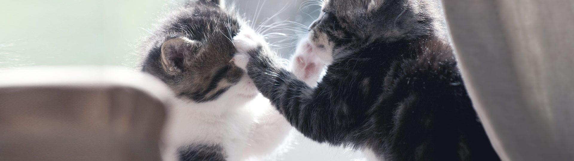Gatos haciendo pis en alfombras