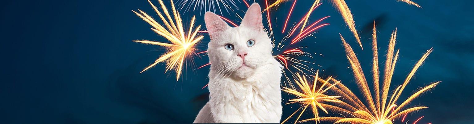 Vuurwerkangst kat
