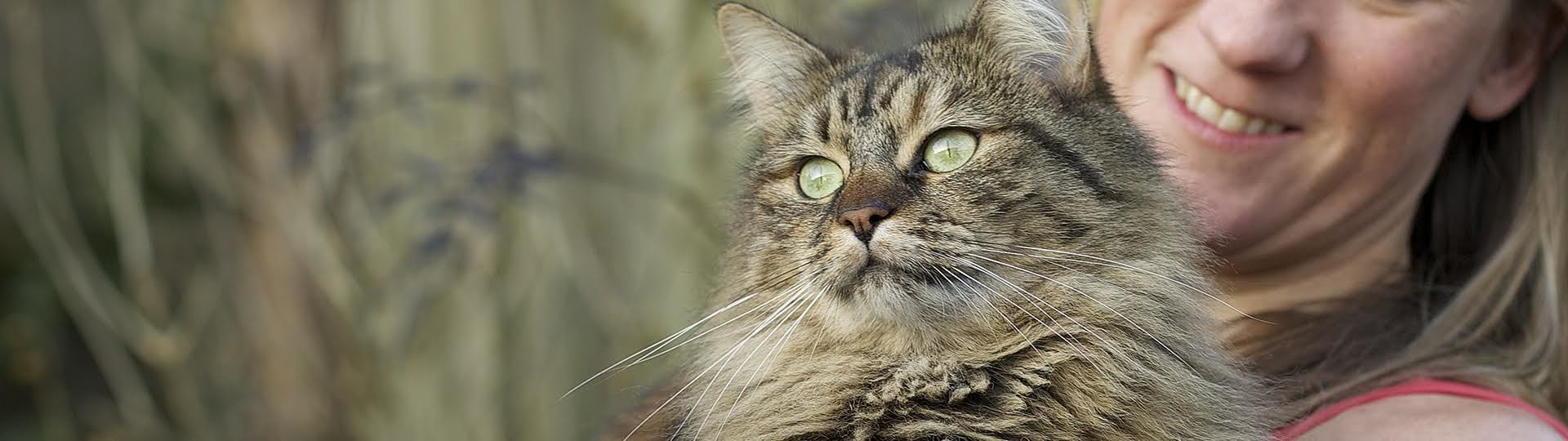 Feliway can help your cat