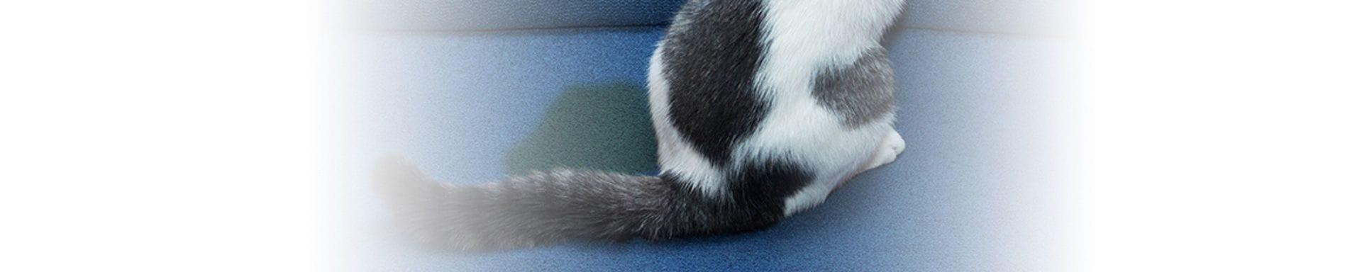 Any cat peeing around Webcam Teen