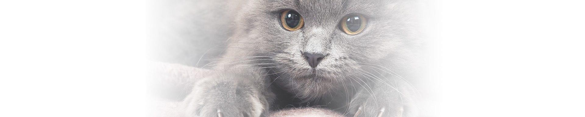 Cat Stress