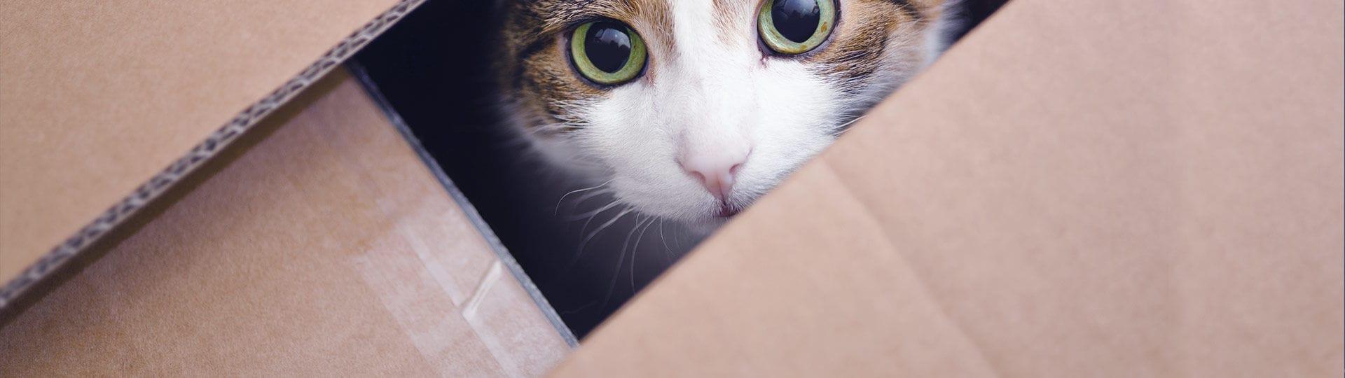 Katte kan ikke lide at flytte