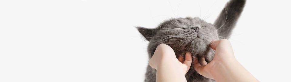 Katzen natürlich mit Pheromonen beruhigen