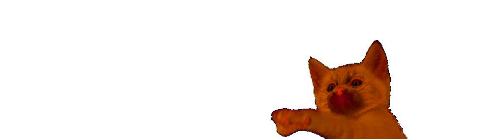 La science et Feliway: phéromone chat