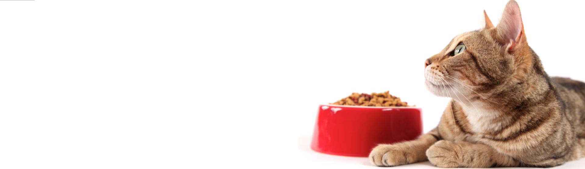 Appetitlosigkeit bei Katzen