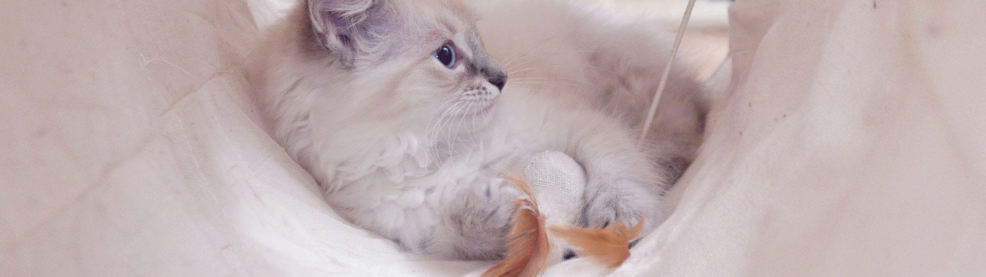 Macska panzióban