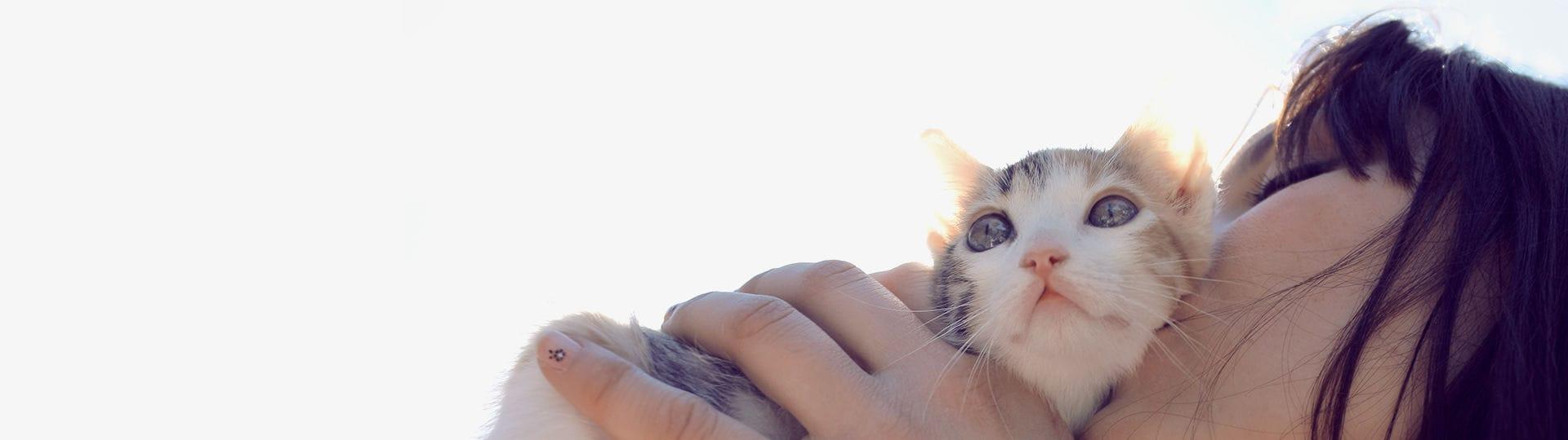 Les vétérinaires recommandent Feliway
