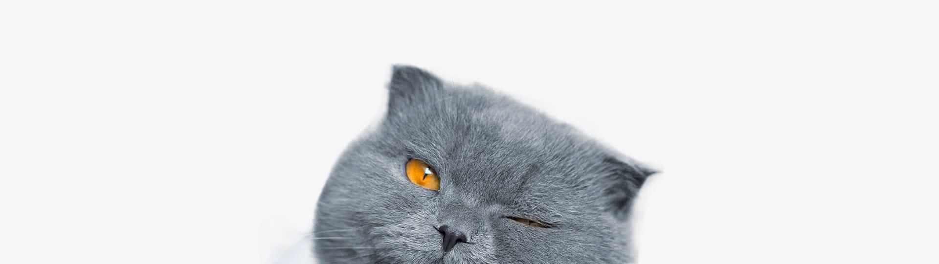macska viselkedés