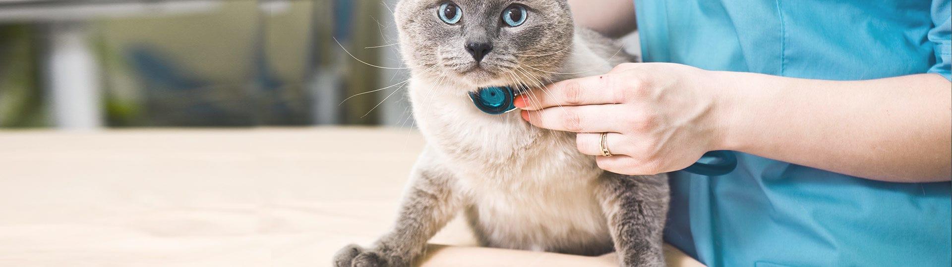 chat stressé chez le vétérinaire