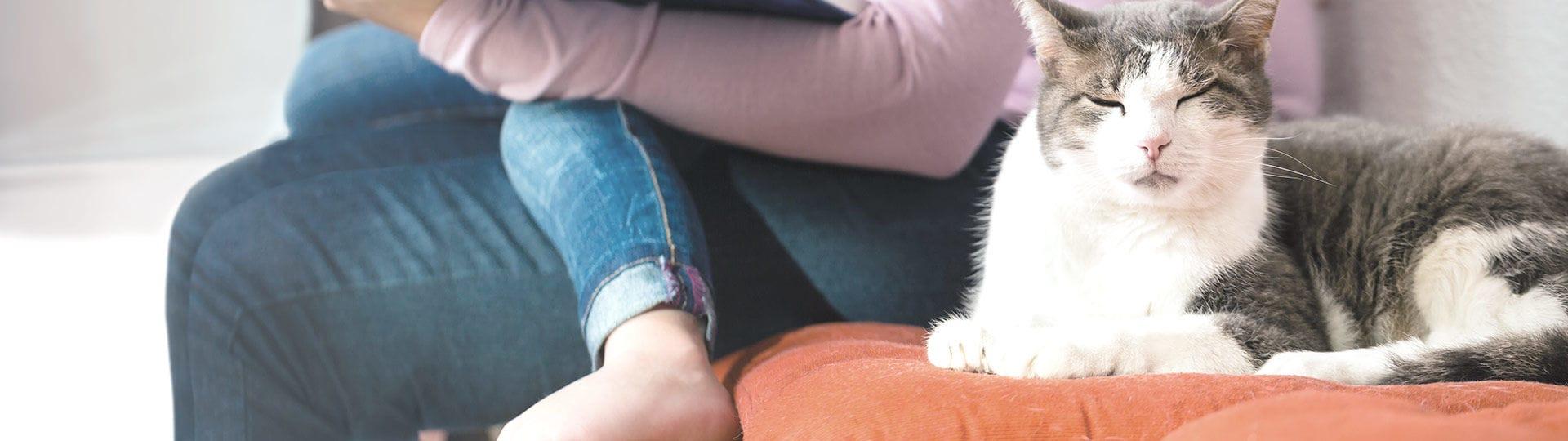Visiteurs et le chat