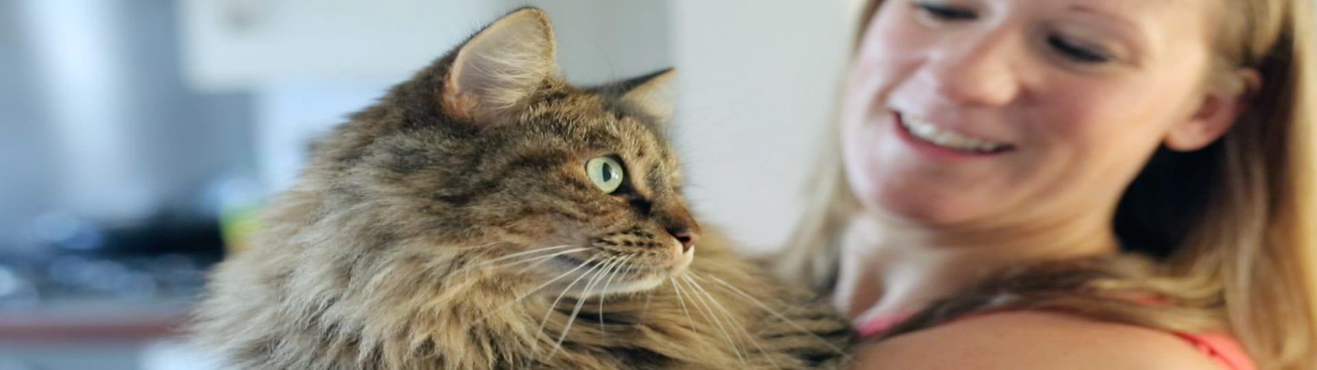 Το μυστικό για ευτυχισμένες γάτες
