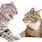 Συγκρούσεις ανάμεσα στις γάτες