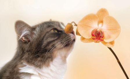 El curioso olfato de los gatos / Artículos técnicos / Feliway