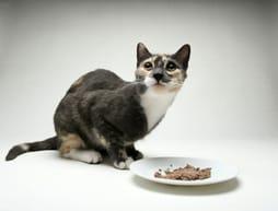 Katze hat keinen Appetit