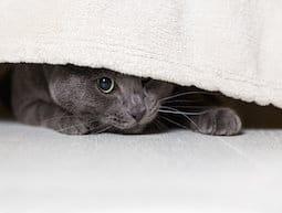 chat qui a peur et se cache