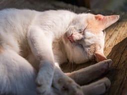 A lusta macska lehet, hogy szorong