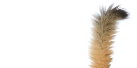 A boldog macska függőlegesen felfelé tartja a farkát