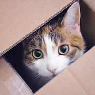 Flytte med en kat