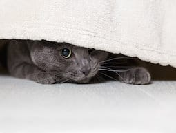 cat hiding is often stress related