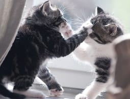Katten ruzie