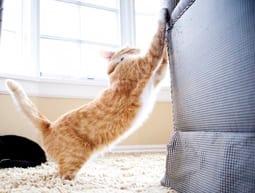 Katze kratzmarkiert