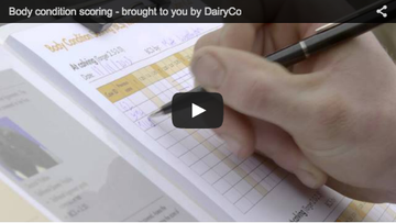 Body Condition Scoring by DairyCo
