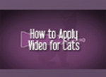 How to Apply the Flee Control Cats Need Video