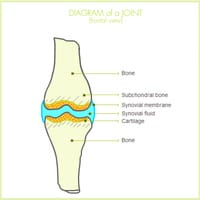PUB_030_LAM_diagram_joint