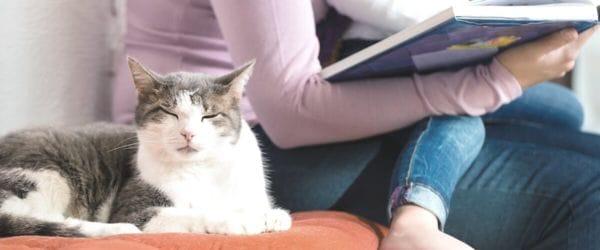 A mi gato no le gustan las visitas