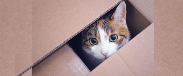 Mudanzas y gatos