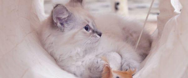 chaton couché dans son panier