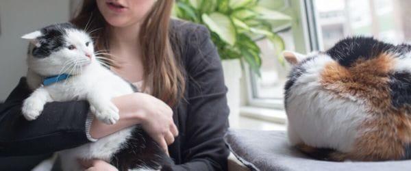 Ongewenst kattengedrag: vechten met andere kat